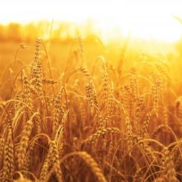 impact-food-crops